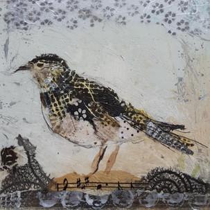 Garden Sparrow