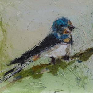 Summer Swallow