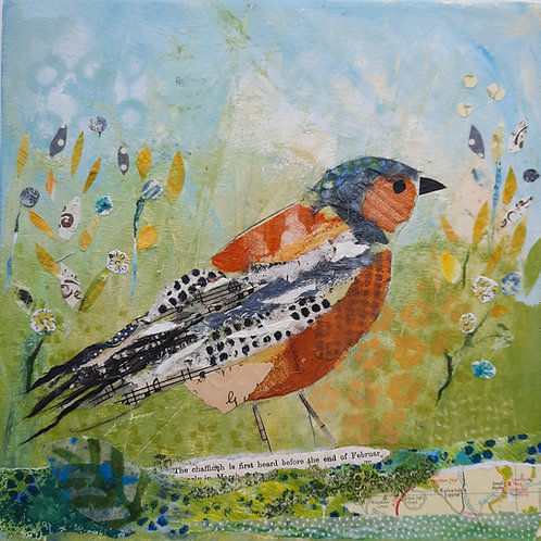 Chaffinch in the field