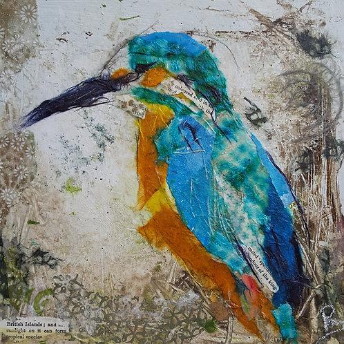 'Mr Kingfisher' greeting card
