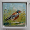 Thumbnail: Chaffinch in the field