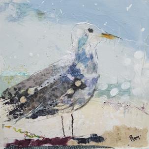 Seagull on a windy beach