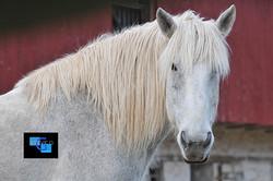 Horses-2344.jpg