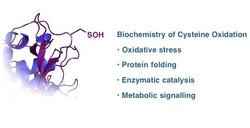 Probes for Cysteine Oxidation