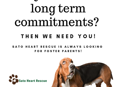 What Does Fostering A Dog Entail?