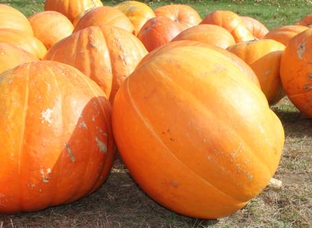 Pumpkin Protein Bars