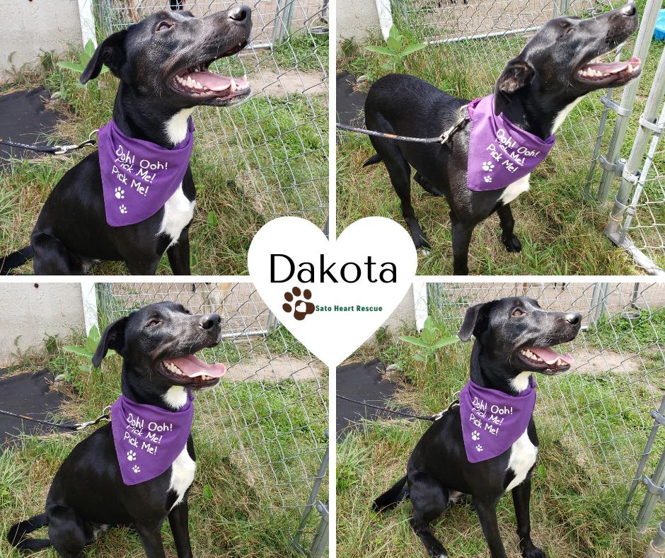 Dakota - Up For Adoption