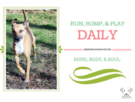 Run, Romp & Play