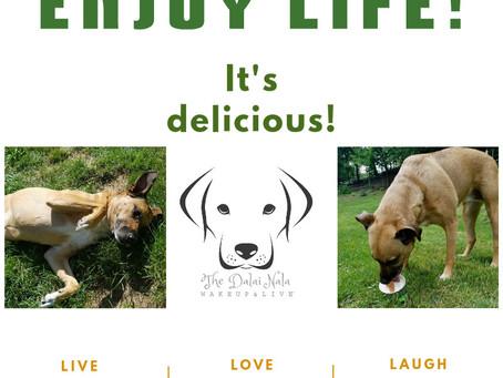Enjoy Life -- It's Delicious