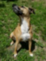 inspirational, motivational rescue dog,