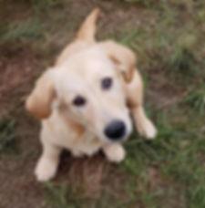 Cute Rescue Dog