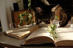 Chat et livre CYRANO