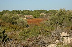 Le platreau de Leucate et ses chemins de randonnée
