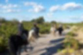 Randonnées à cheval avec Equus caballus