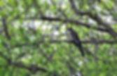 Les Coussoules, paradis des ornithologues