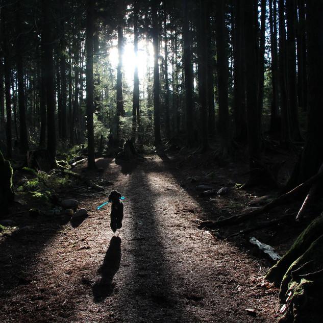 A poodle walk