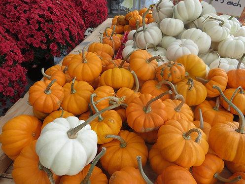 Gourds/Mini Pumpkins