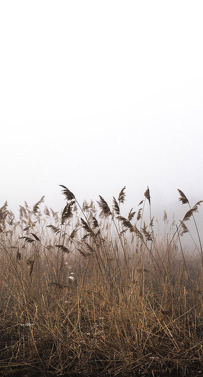 "6"" Grasses"