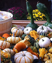 Gourds mixed.jpg
