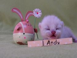 A-Wurf-Andy001.JPG