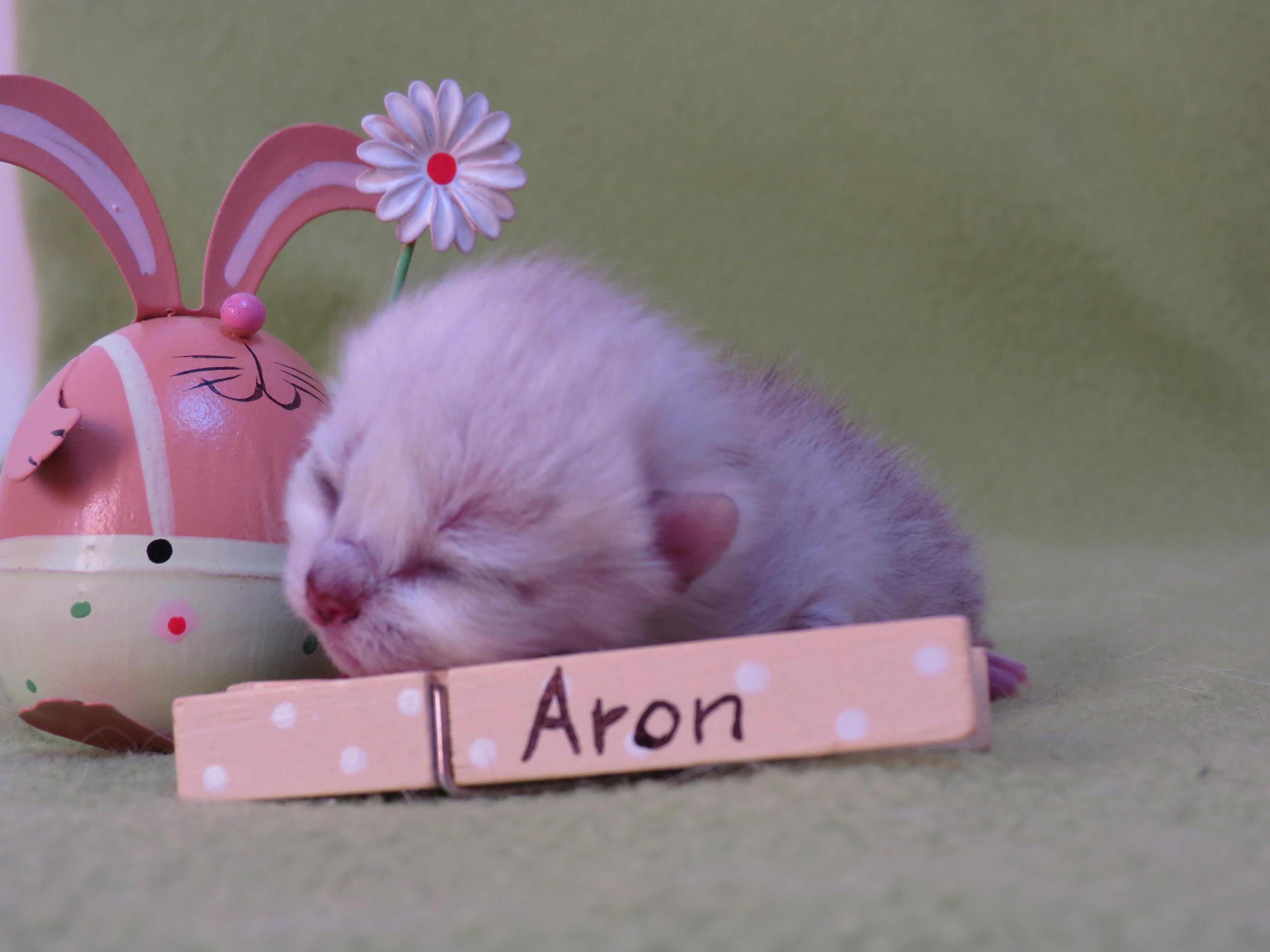 A-Wurf-Aron001.JPG