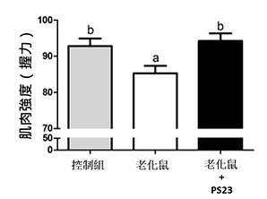 PS23青春益生菌-抗老益生菌-蔡英傑-動物實驗-肌力2.jpg
