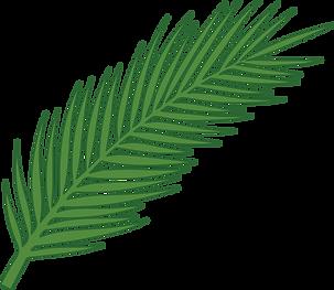 Folha palmeira vetor.png