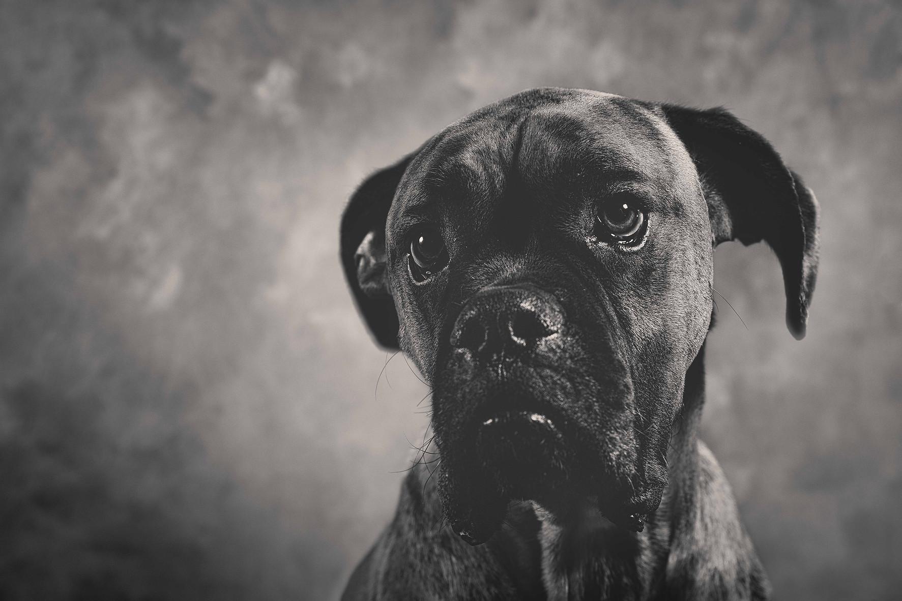 Photographie chien- jbb studio.jpg