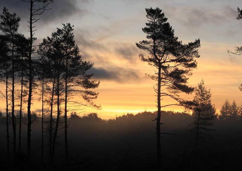 Paysages,_nature,_lever_du_jour_hiver