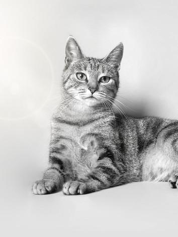 chat noir et blanc JBB Studio