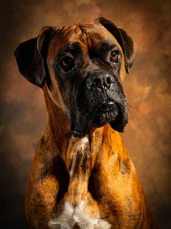 Photographie chien- jbb studio