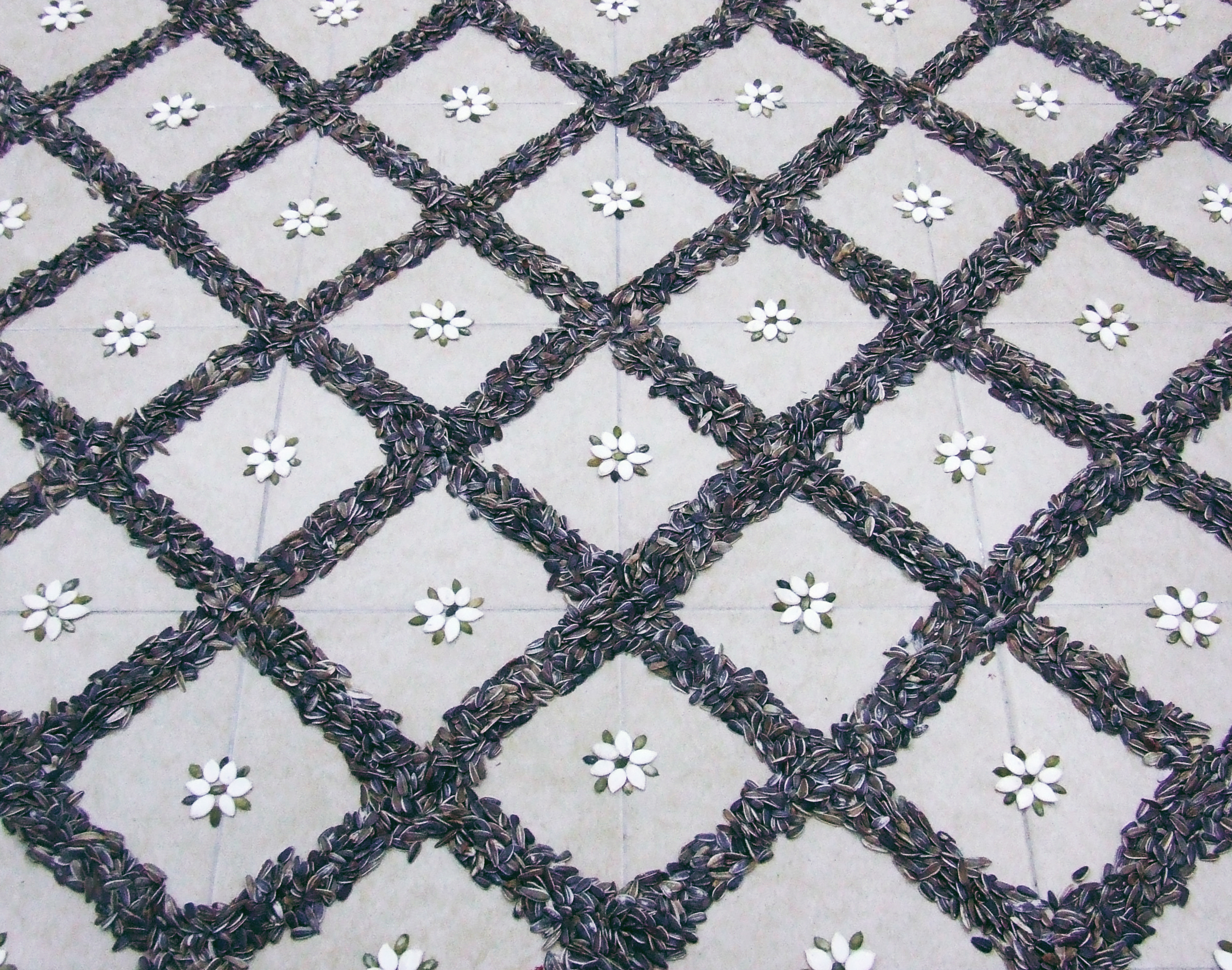 Seeds floor_5_Shahar Tuchner.jpg