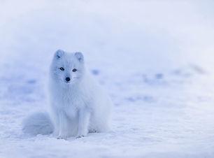 iceland-1979445_1920.jpg