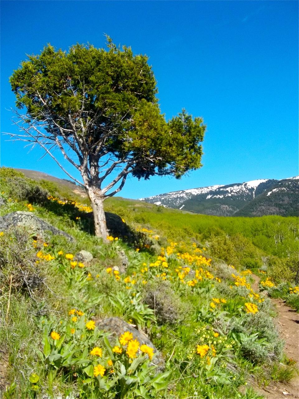 Aspen Trail Hike