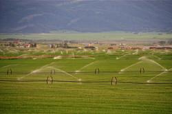 Sprinklers Across the Valley