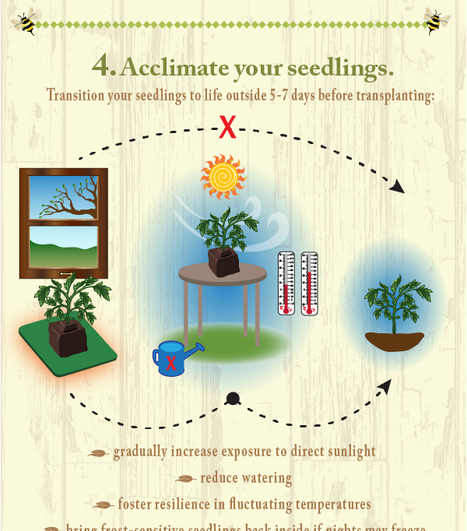 Fruition Seeds Infographic