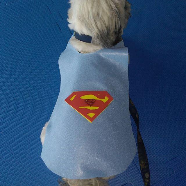 capa super cão