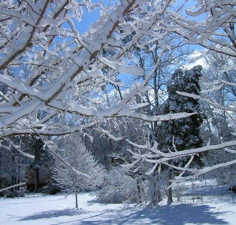 Quiet hush of new fallen snow