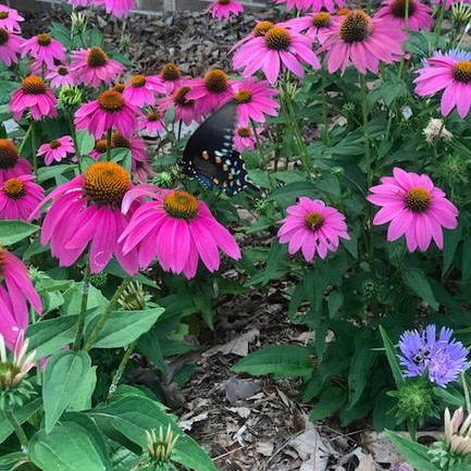 Butterfly enjoying the new flowers