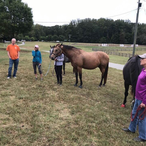 Blessing of the Horses