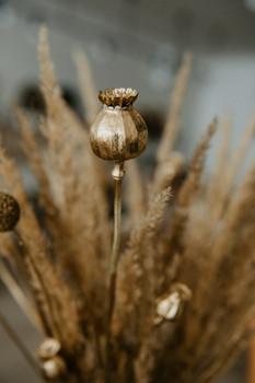 Golden Poppy Pods