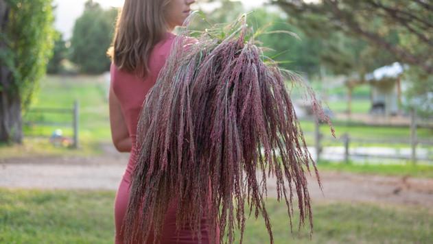 Ruby Silk Grass