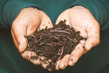 BD compost image.jpeg