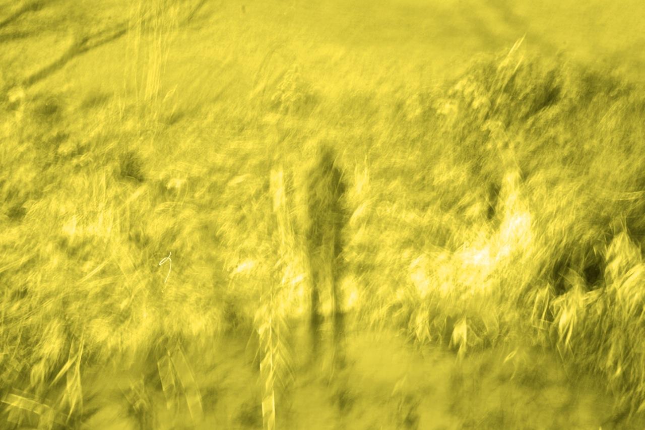 Hyde Moors, 2010