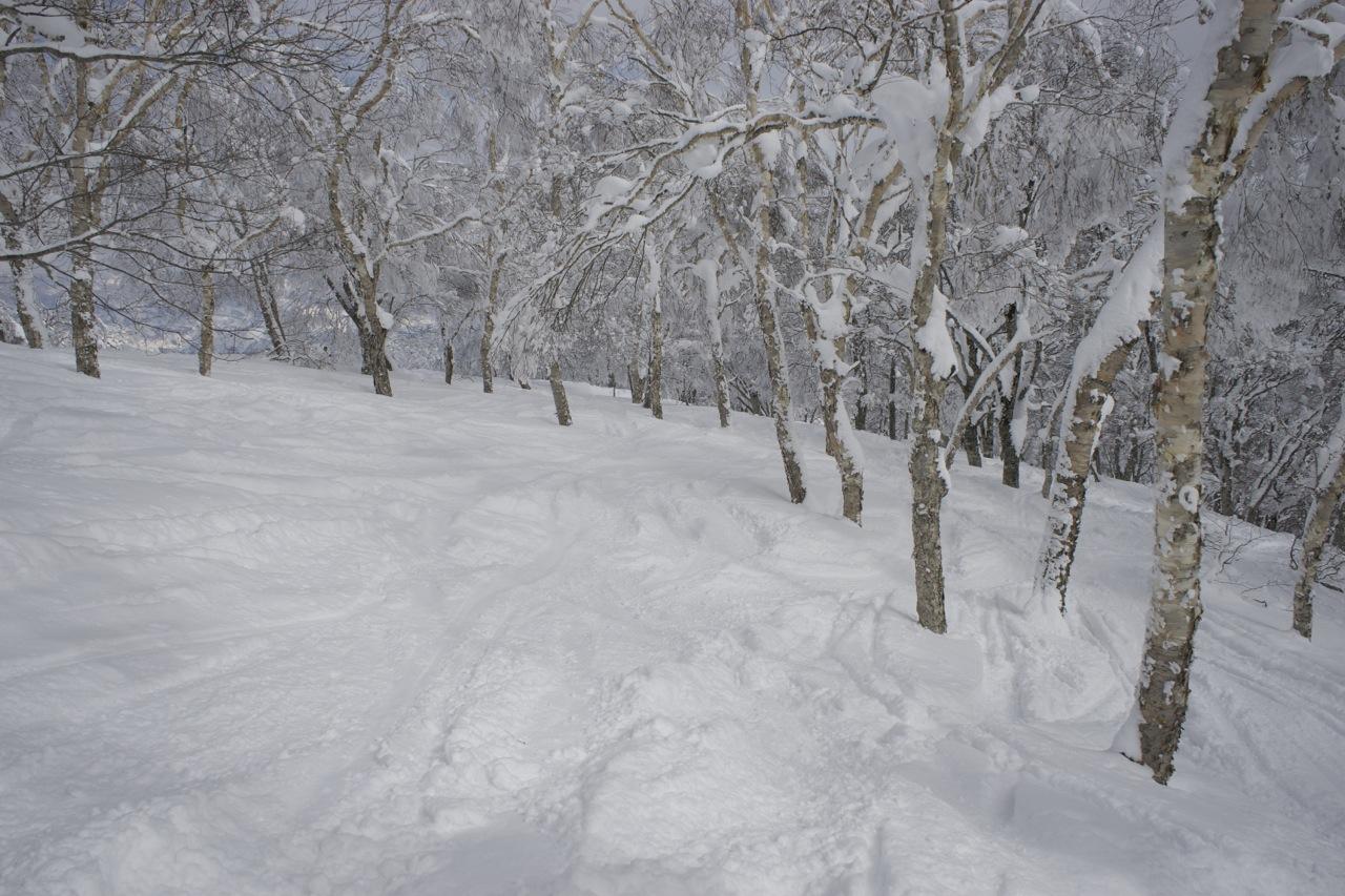Tree side, 2014