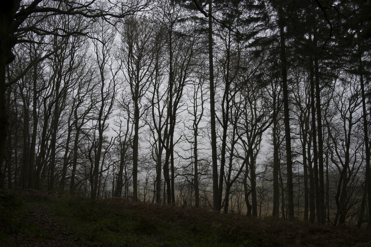 December treeline, 2014