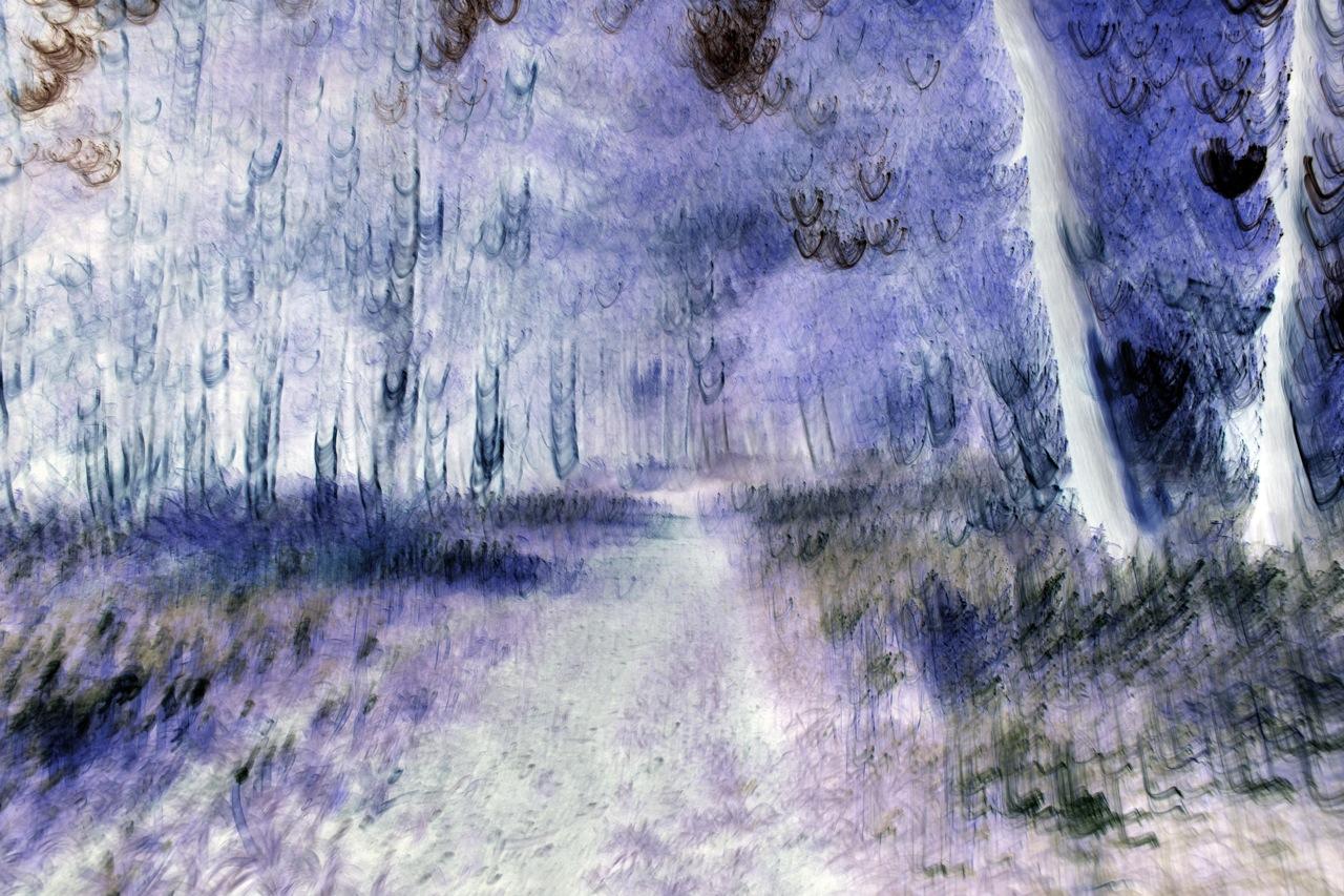 Jane's walk, 2013