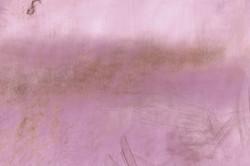 Lilac bells, 2013