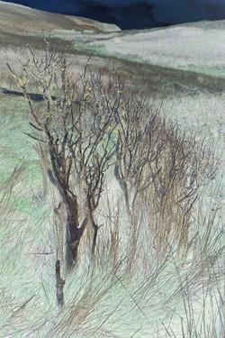 Bushy bush, 2014