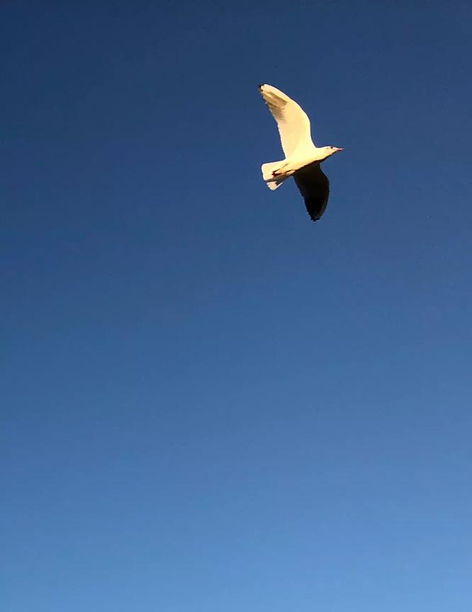 Oiseau en vol